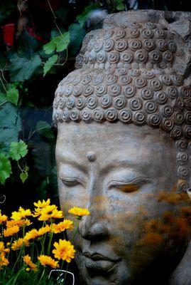 Et la fleur se fit offrande pour la paix de l'âme