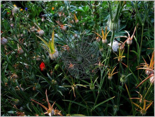 et l'araignée tisse sa toile