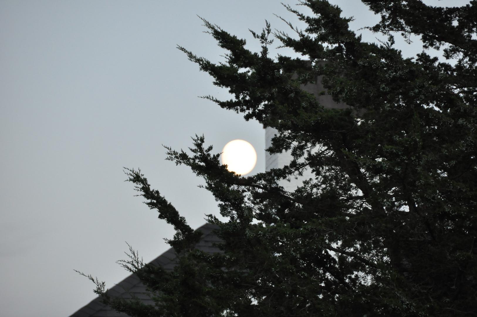 Et l'arbre avala Dame Lune
