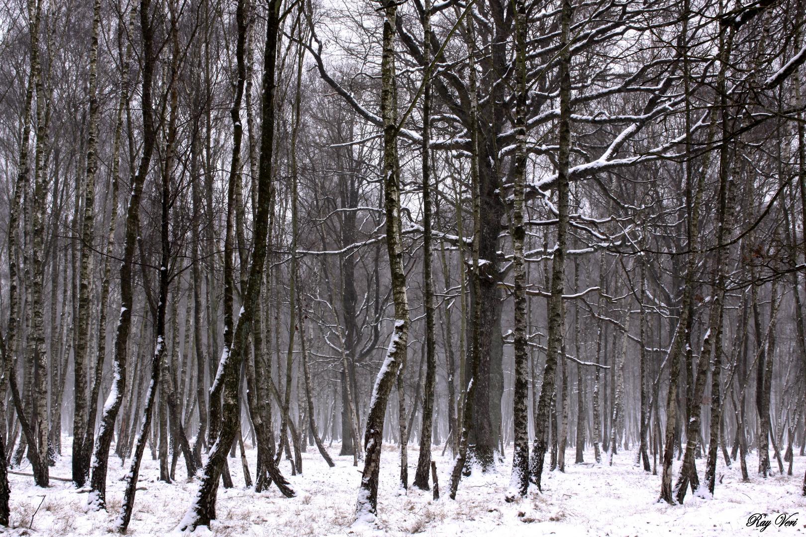 et tombe la neige
