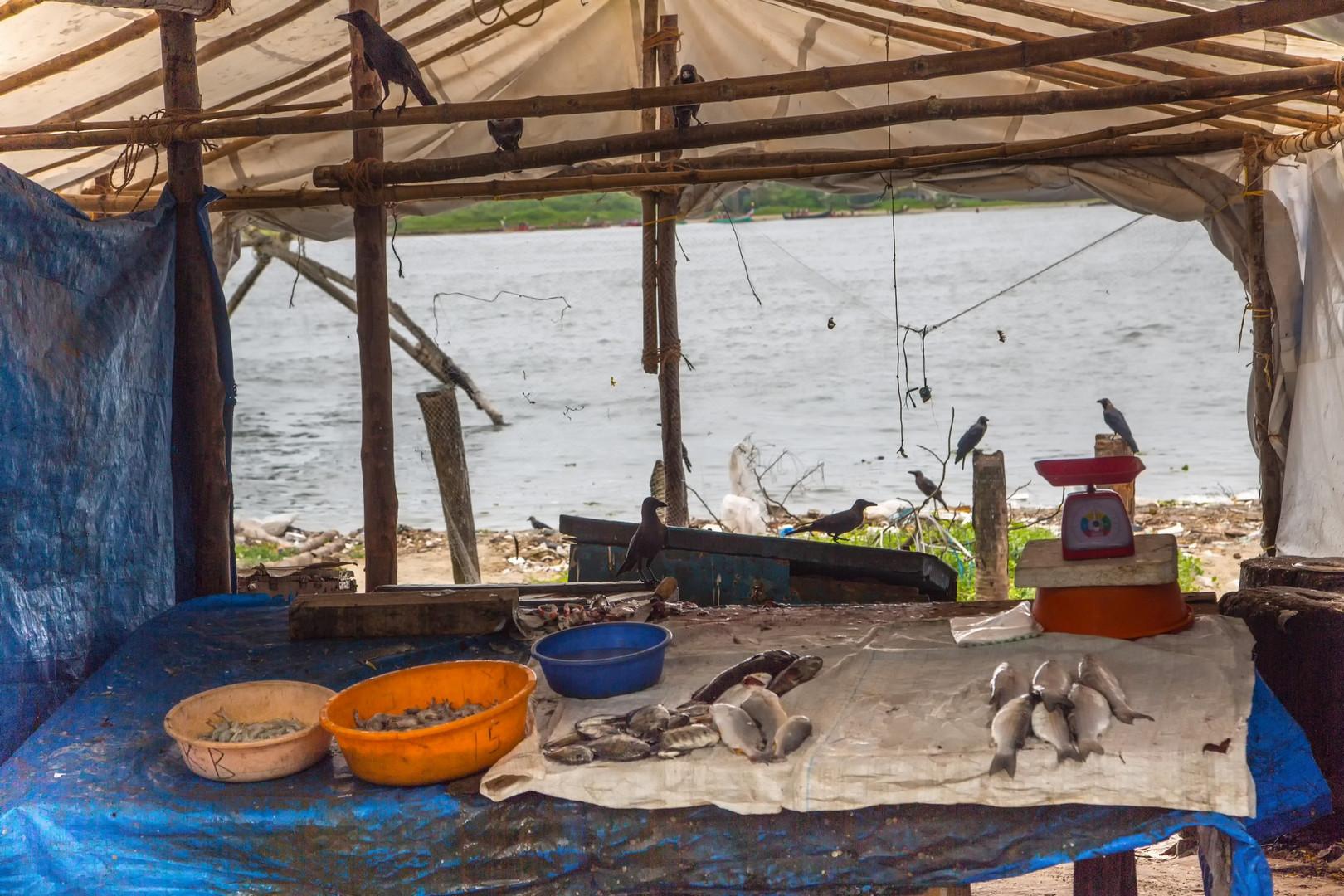 Etal de poissons qu'on peut se faire préparer dans un restaurant voisin