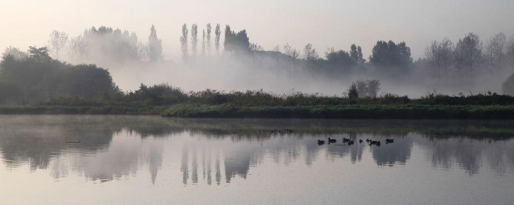 Etang dans la brume