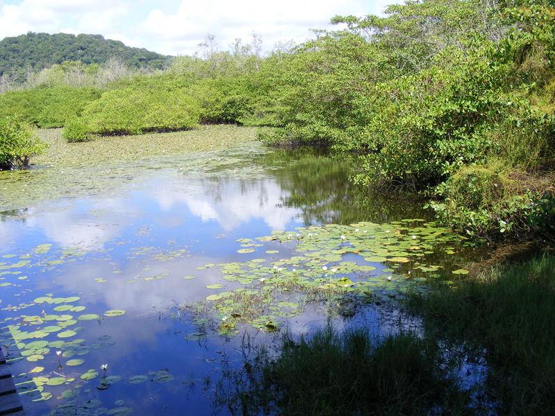 étang des Salines à Cayenne