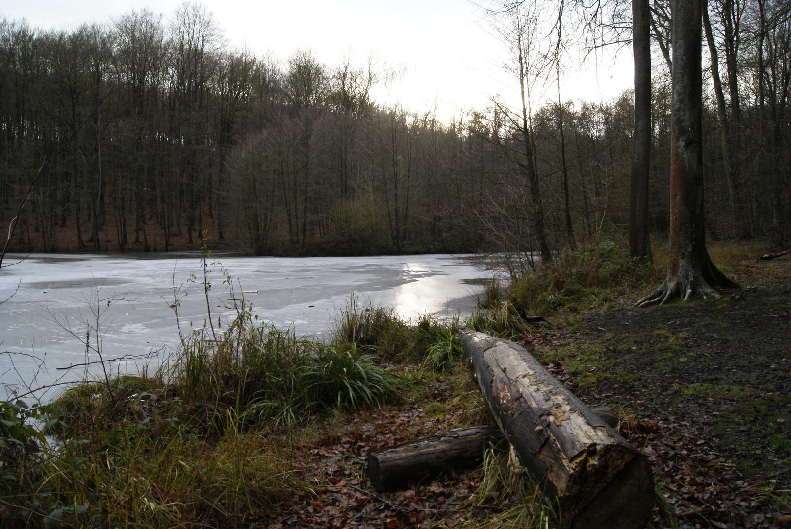 étang en forêt de clermont, oise