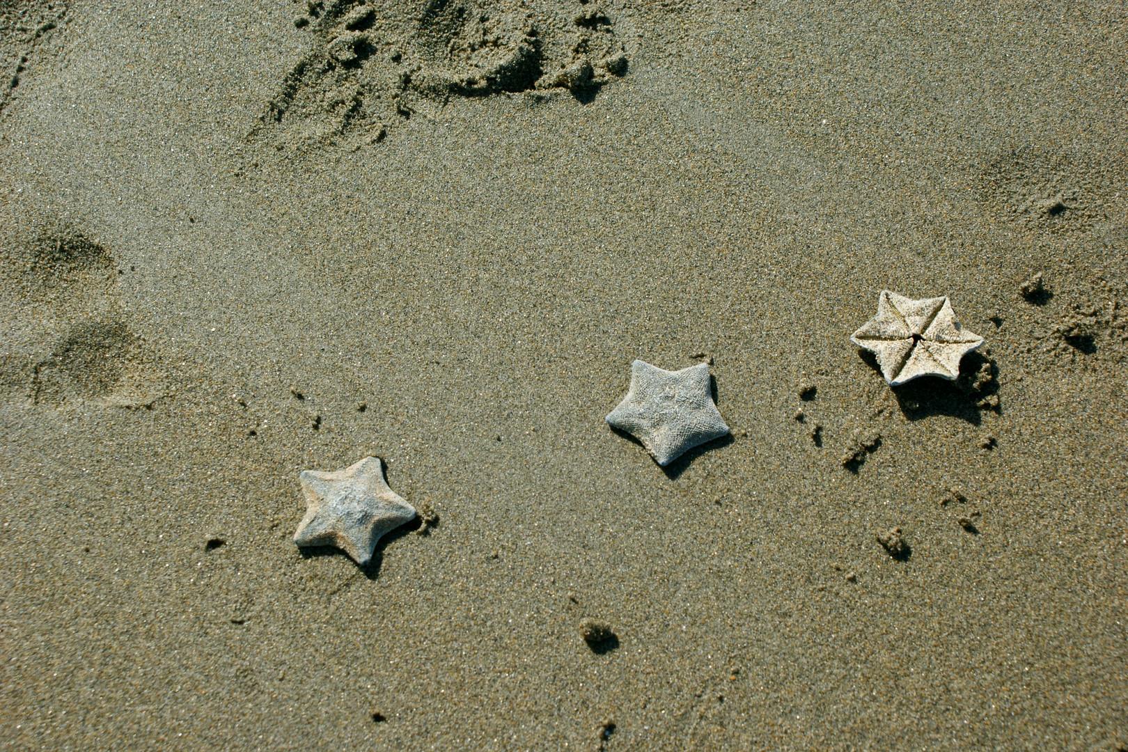 Etoiles se baladant sur la plage...