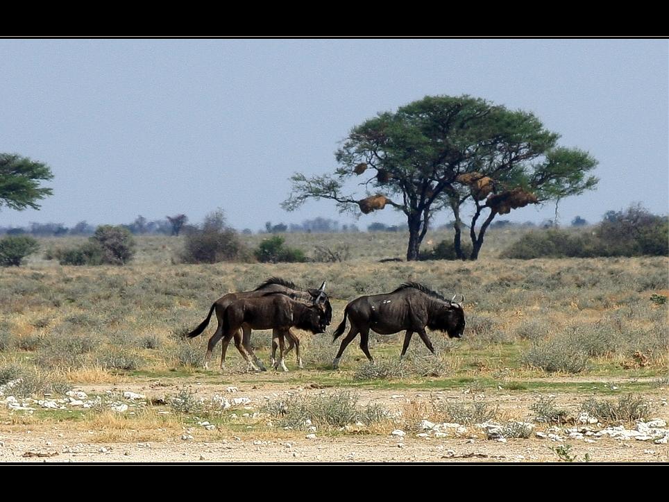 Etosha -Landschaft