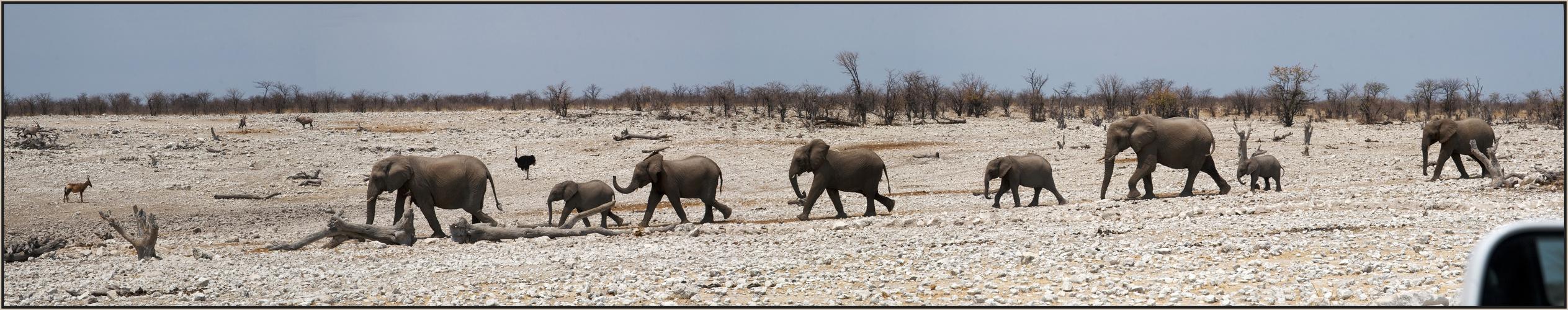 Etosha National Park - Elefantenparade