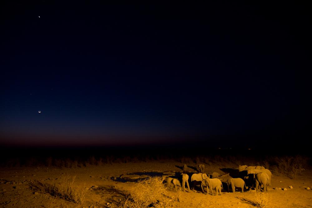 Etosha Nights