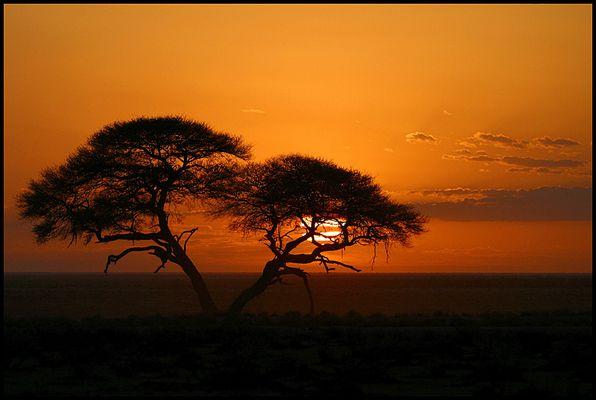 Etosha Sunrise