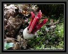 etrange champignon