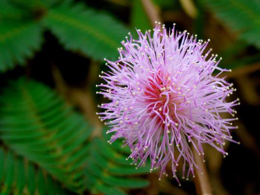 étrange fleur, ile de la réunion