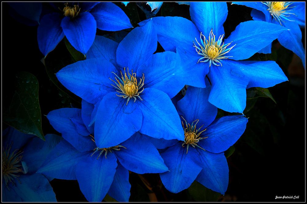 Etre Fleur bleue