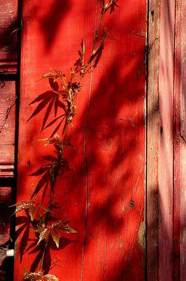 Etude in red tones