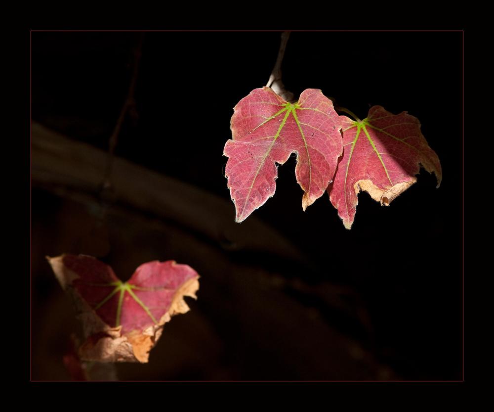 etwas Herbst...