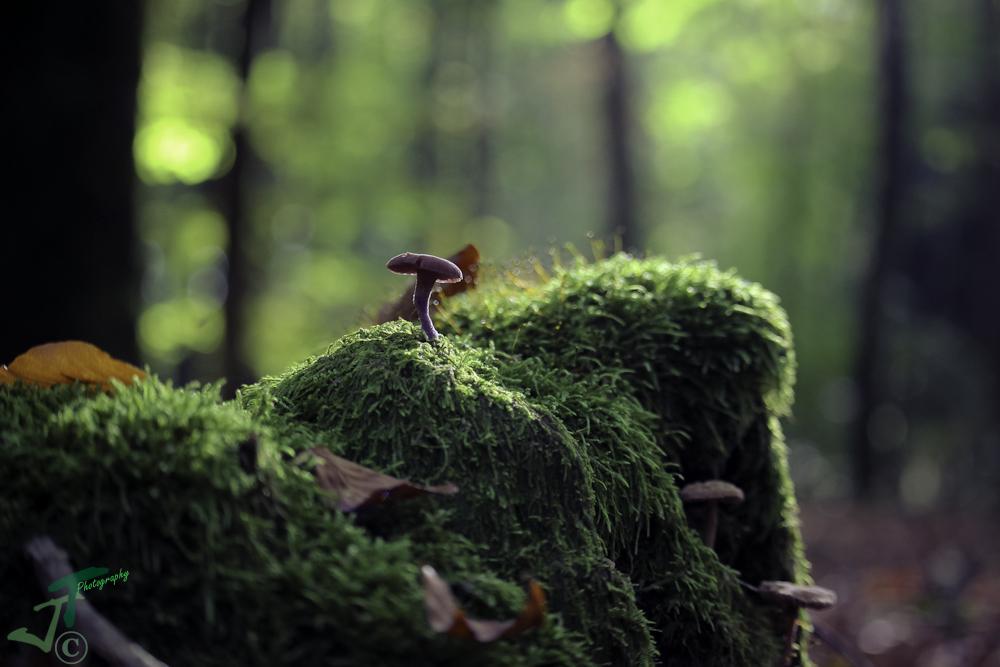 etwas mystisches im Wald