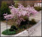 Etwas rosa Frühling...
