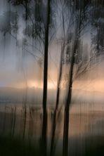 eucaliptos en la laguna.