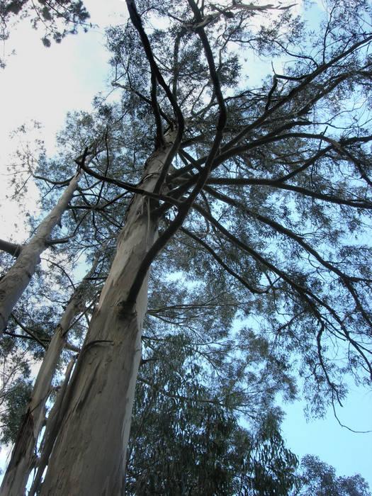 Eukalyptus-Dach auf Madeira