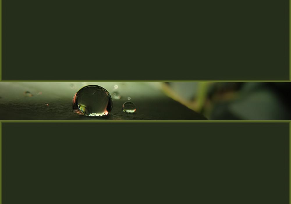Eukalyptus-Tropfen-Strip
