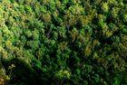 Eukalyptus Urwald2