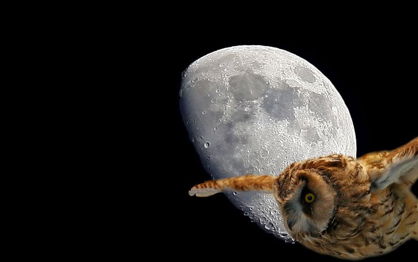Eule vor dem Mond