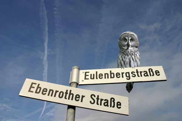 Eulenbergstr.