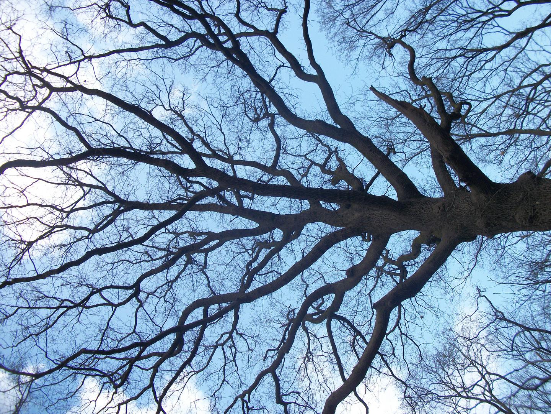 evantail de branches