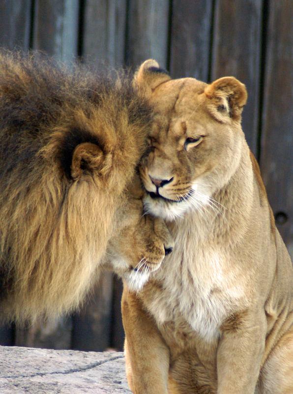 Even the king needs a hug