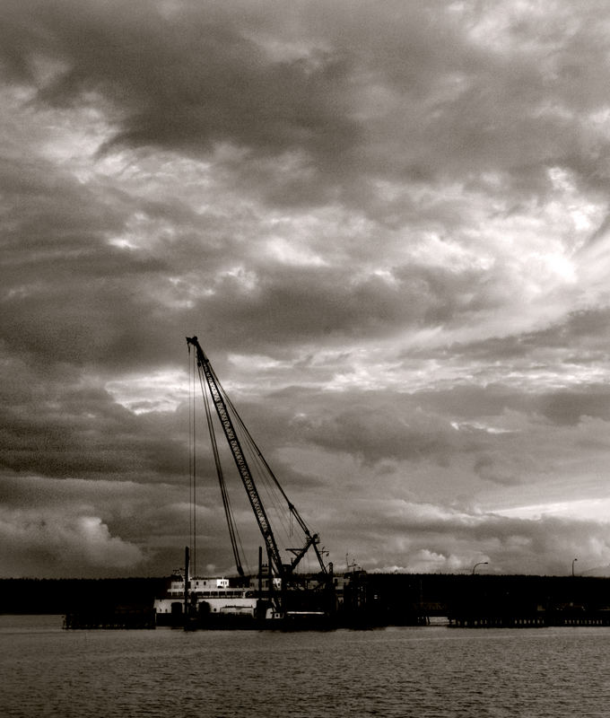 evening crane