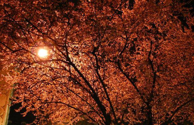 Evening Walking