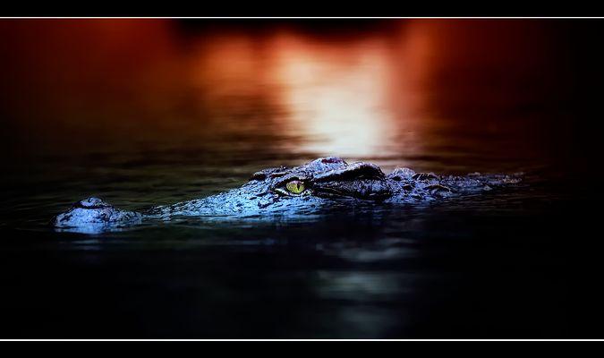 Everglades  !!