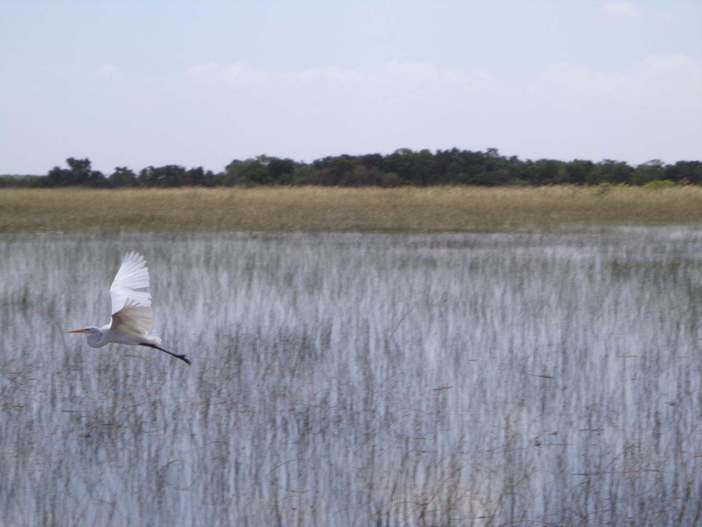 Everglades - Shark Valley