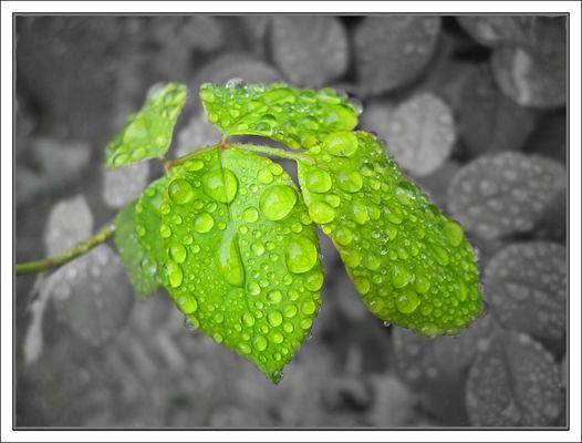 ...Ewiger Regen...