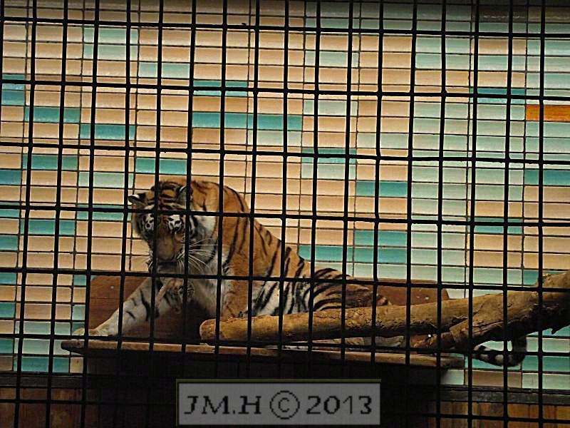 Exklusiv Foto – Tiger Mama mit Baby