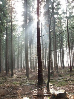 Exkursion im Wald