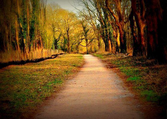 Exo 302 :La route /Le chemin