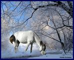 Exo 75 - Un Cheval dans la neige