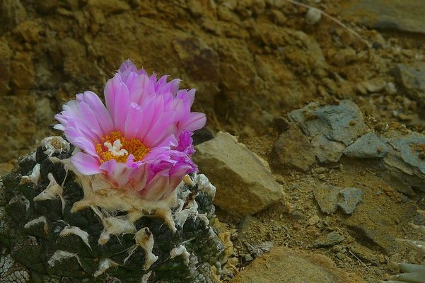 Exotic Beauty (11) : Living Rock