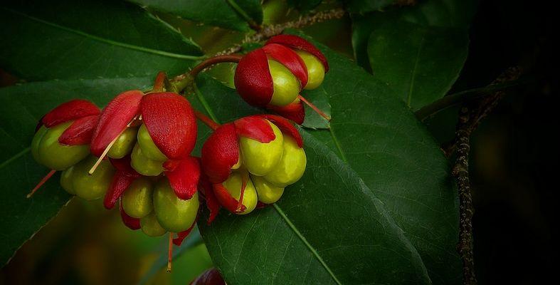 Exotic Beauty (56) : Bird's eye bush