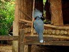 Exoticher Vogel