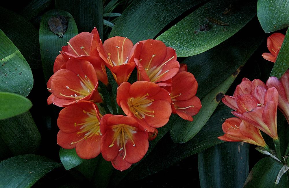 Exotische Blüte []04]