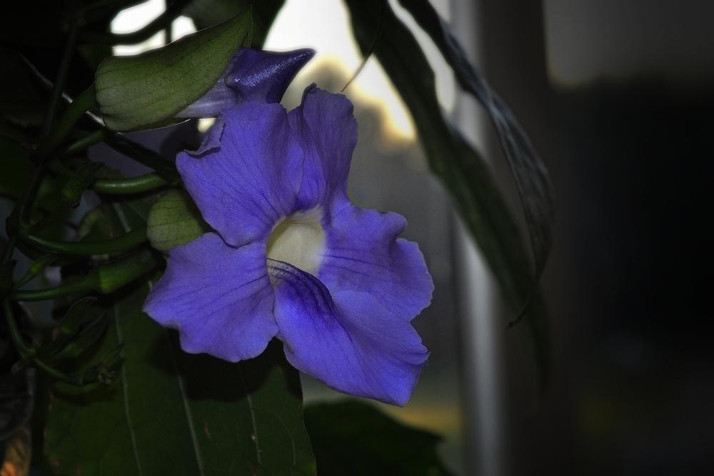 Exotische Blüte aus dem Botanischen Garten....