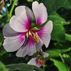 Exotische Blüte aus dem Botanischen Garten...