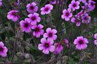 Exotische Blüten.....