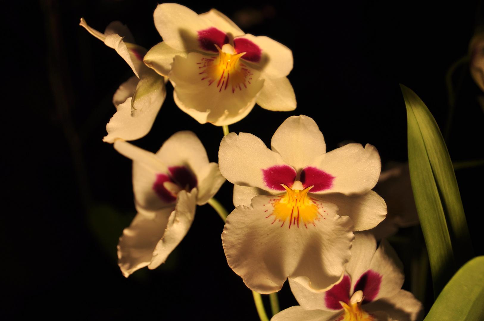 Exotische Blüten 2