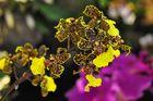Exotische Blüten 4