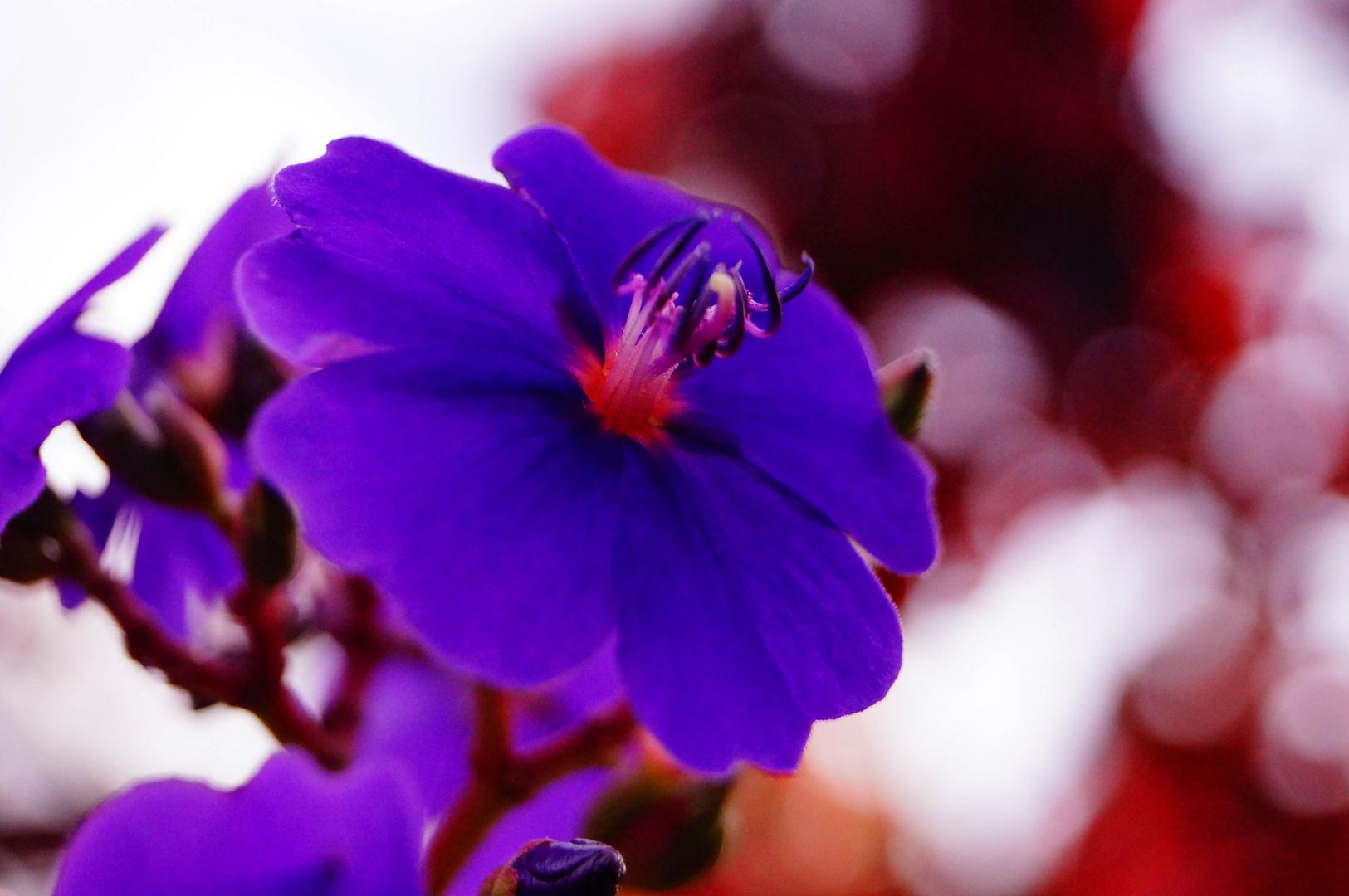exotische blumen foto bild pflanzen pilze flechten bl ten kleinpflanzen blumen. Black Bedroom Furniture Sets. Home Design Ideas