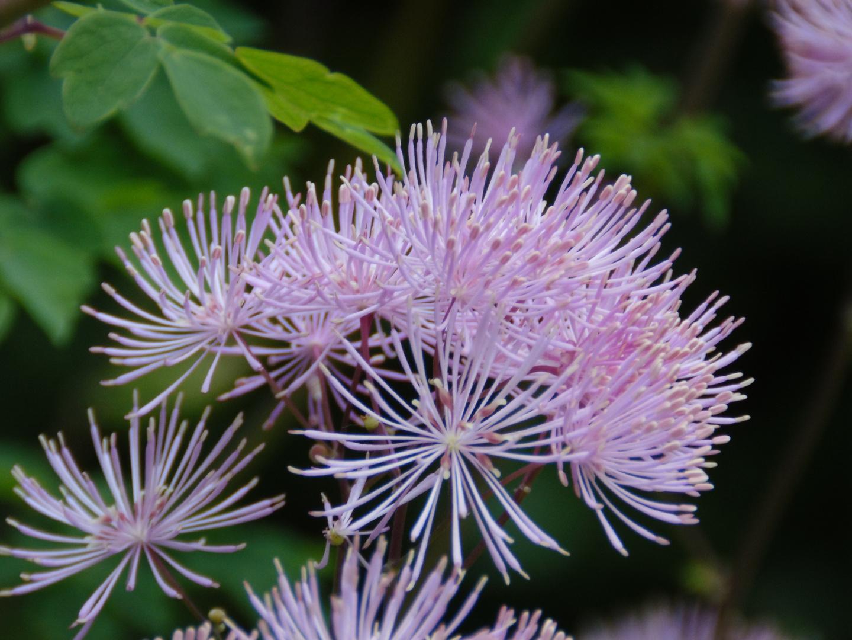 Exotische Makro Blüte