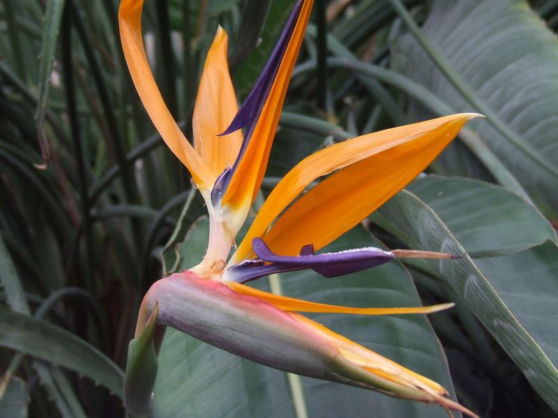 Tropische Pflanzen Kaufen : exotische pflanzen foto bild die elemente tuncay natur bilder auf fotocommunity ~ Watch28wear.com Haus und Dekorationen