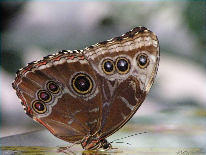 exotischer Schmetterling aus dem Schmetterlingshaus